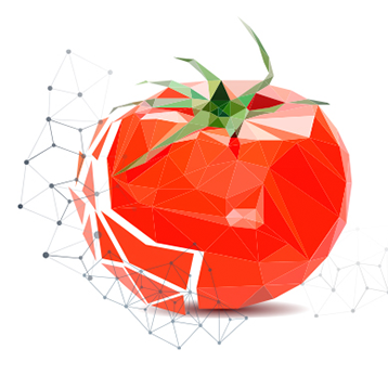 Designed tomato for the GFSI blog post